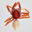 The goblin spiders (Araneae, Oonopidae) ...