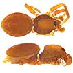Taxonomic descriptions of nine new species ...