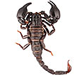 An annotated catalogue of the scorpion ...